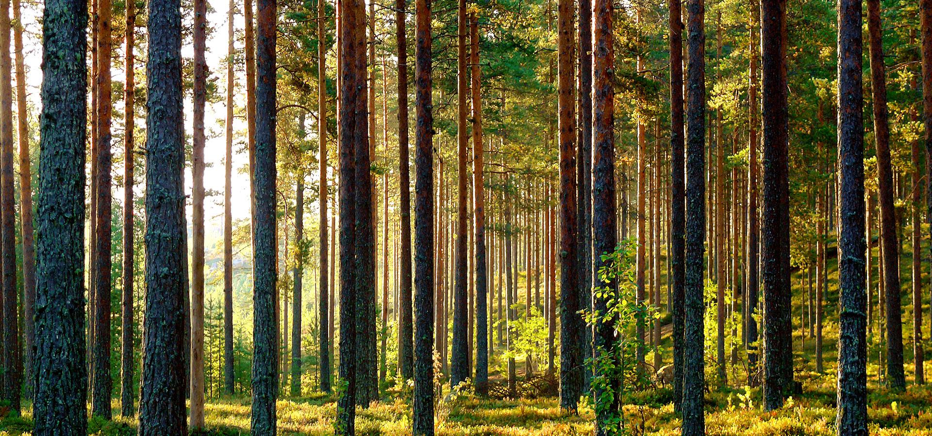 Rovaniemi Casas de Madera ofrece una gran selección de casas de madera confortables y acogedoras que permanentemente extendemos.